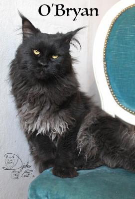 Afficher le site de l'élevage Djoko Cat's