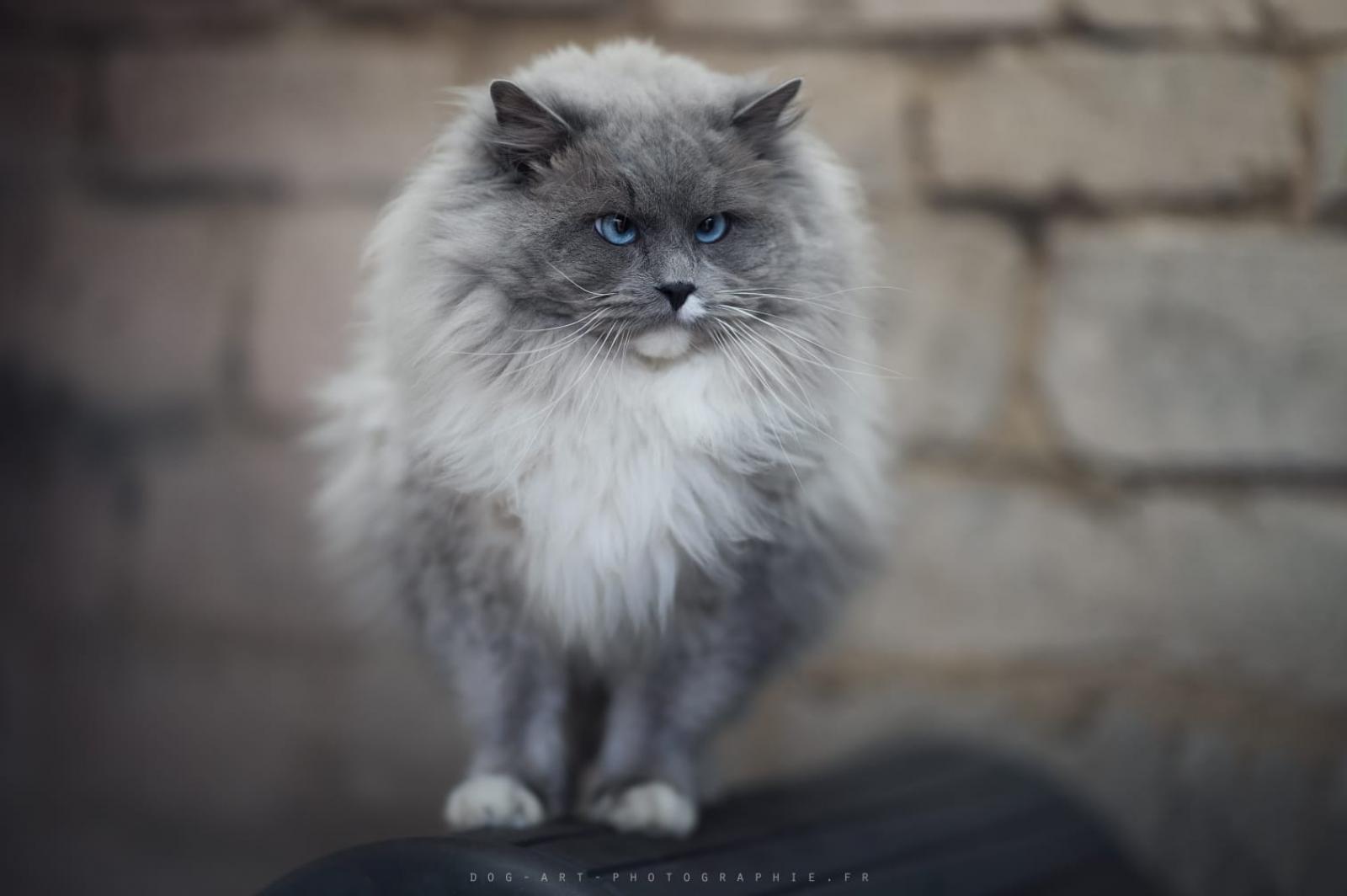 D'axellyne