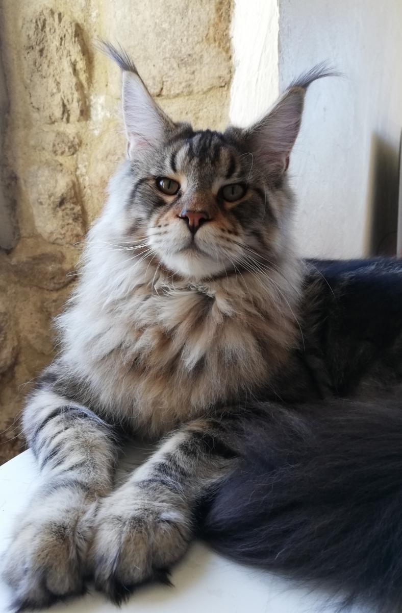 Magnifi'cats