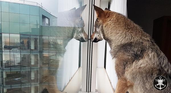Afficher le site de l'élevage L'ancre Des Loups