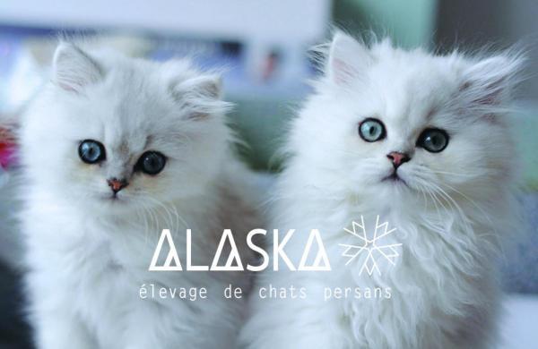 Afficher le site de l'élevage Alaska