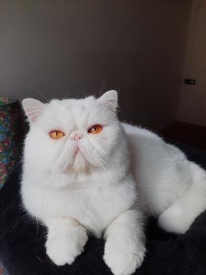 Afficher le site de l'élevage Des Vitals Cats