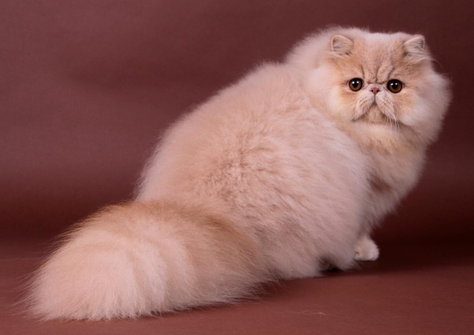 Des Vitals Cats