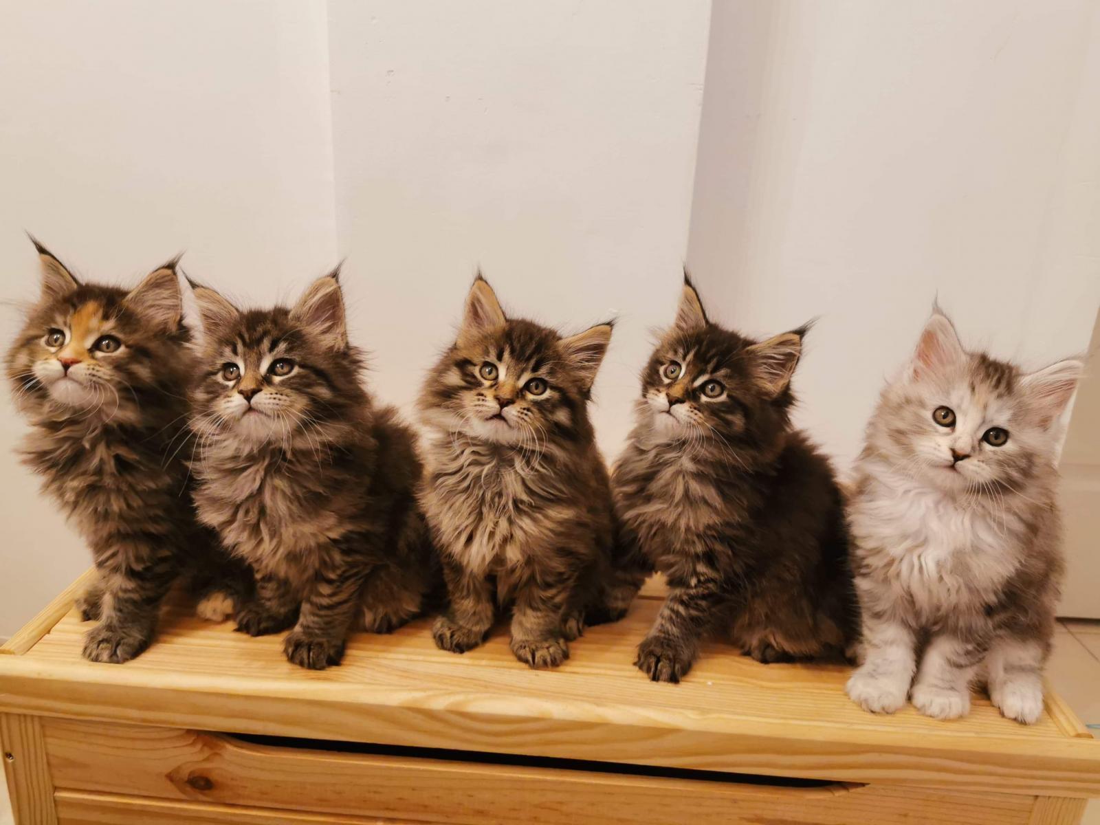 Katt Skalli