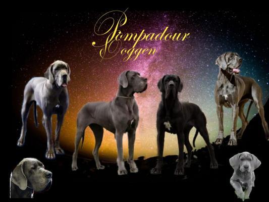 Afficher le site de l'élevage Pompadour Doggen