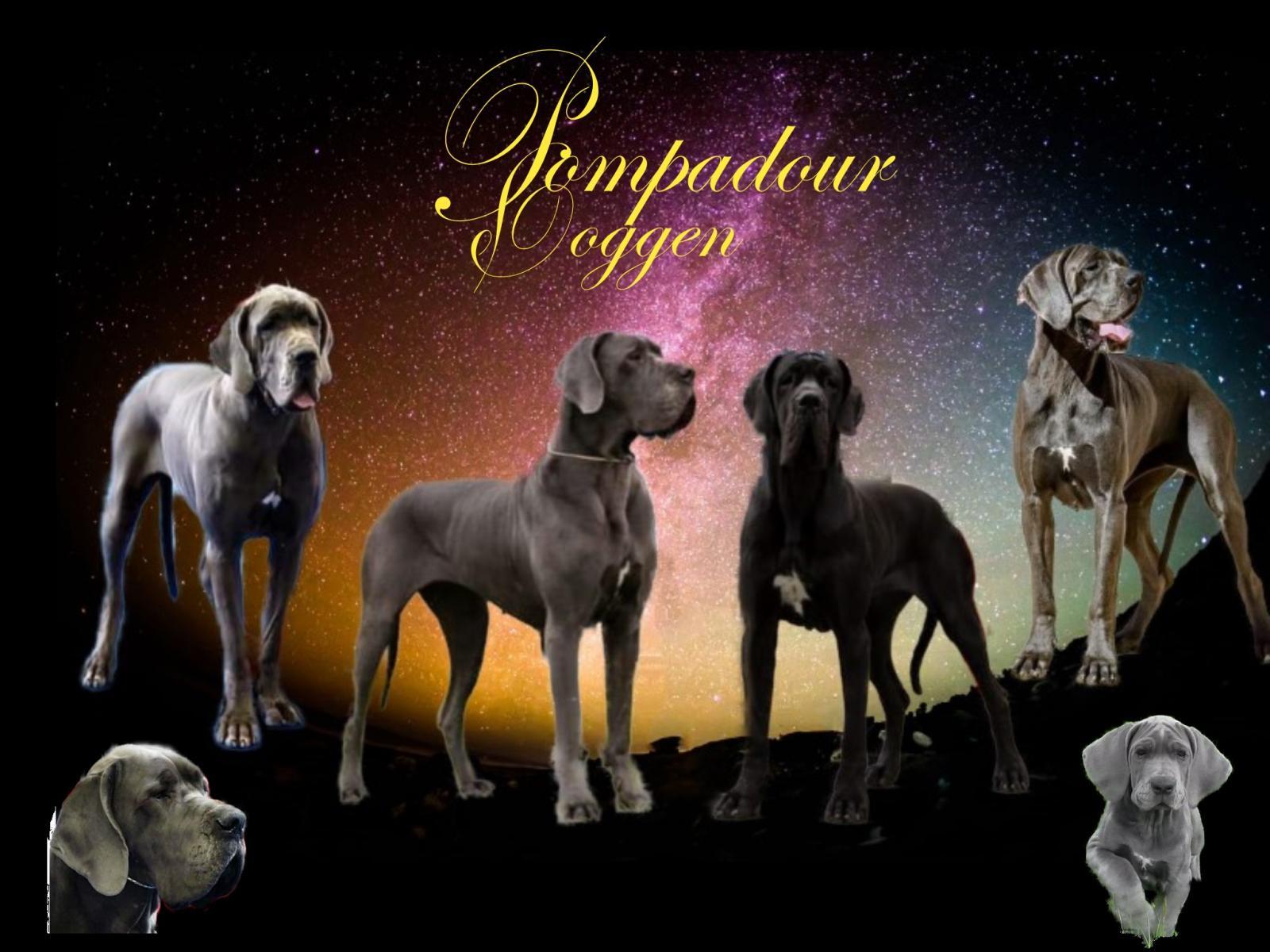 Pompadour Doggen