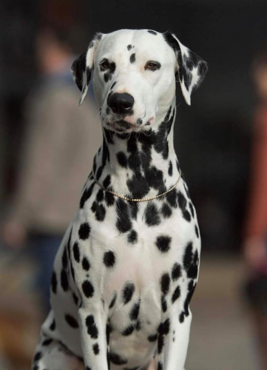Of A Majestic Spotted White
