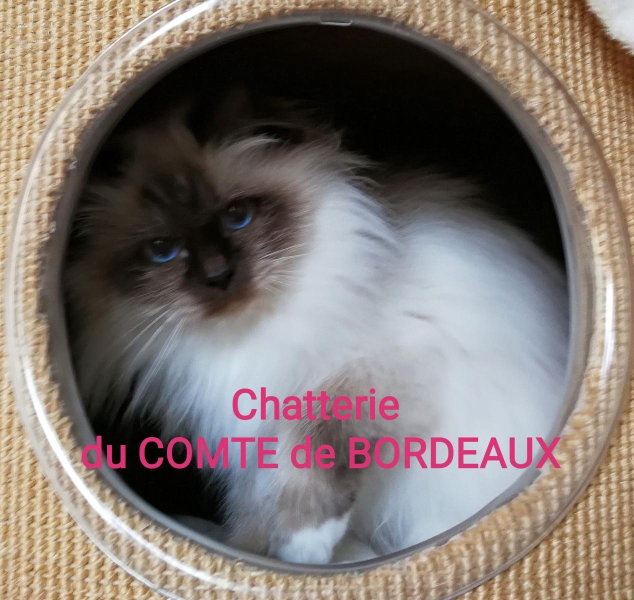 Du Comte De Bordeaux