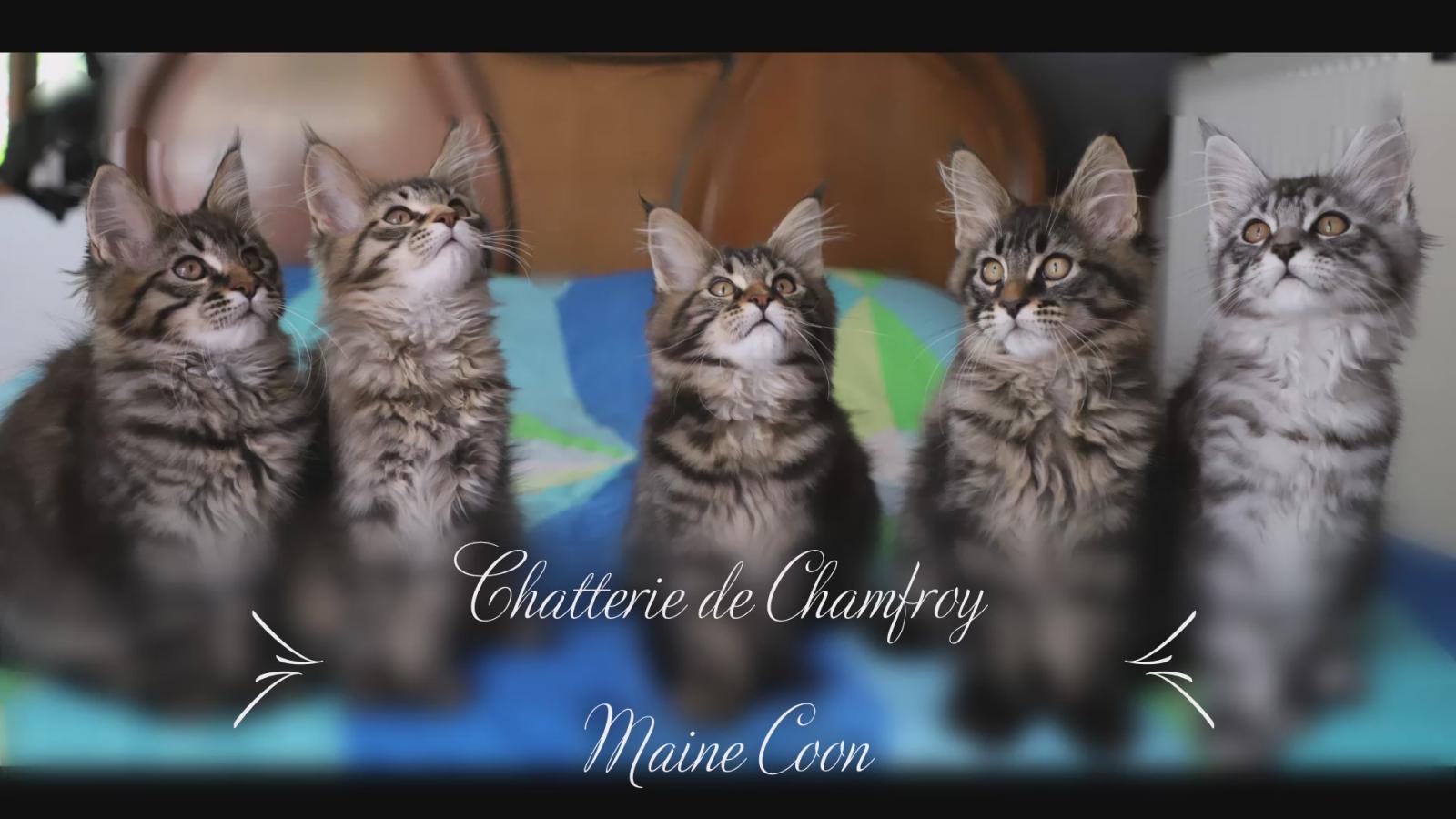 De Chamfroy