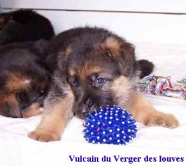 Du Verger Des Louves