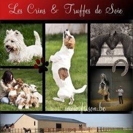 Élevage Les Crins & Truffes De Soie