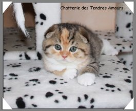 Chatterie Des Tendres Amours