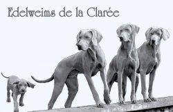 Élevage Edelweims De La Clarée