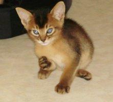 Élevage Signé Cat's Eyes