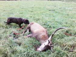 Afficher le site de l'élevage Elevage De L'etang Des Chaumes