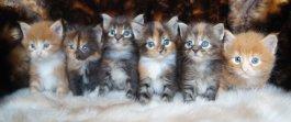 Élevage Wild Lynx
