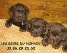 Élevage Les Rives Du Nohain