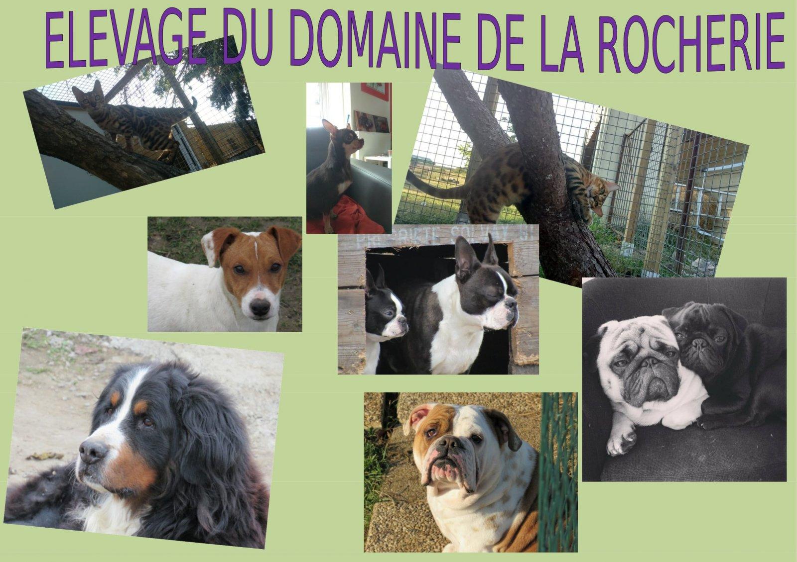 Rocherie Cat's