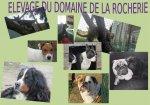 Élevage Du Domaine De La Rocherie