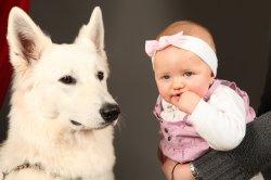Élevage Du Terrier Des Loups Blancs