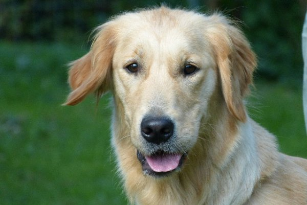 Elphy est une chienne douce et tranquille, qui adore jouer et faire des calins
