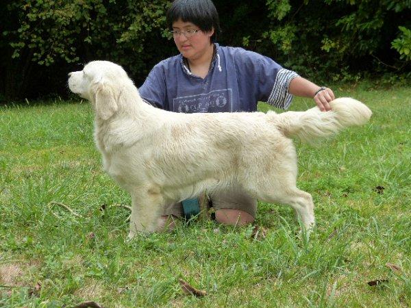 GWENN est la douceur même, belle et caline, c'est une chienne magnifique