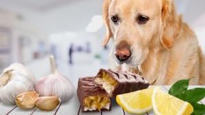 Intoxications alimentaires chez le chien et le chat