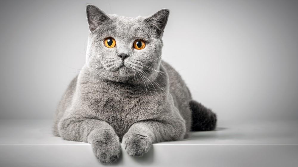 Mon chat peut-il être atteint par la maladie d'Alzheimer ?