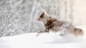 Le chien en hiver : froid lui ? jamais !