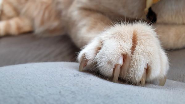 Les griffades du chat : comment limiter les dégâts ?