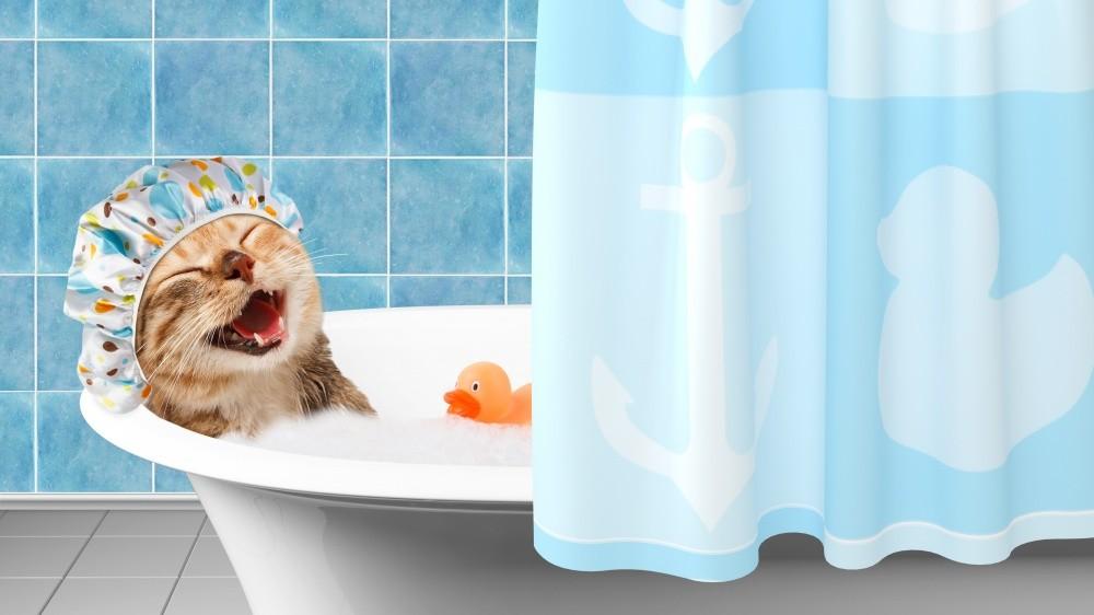 Les soins dermatologiques en mousse pour chiens et chats