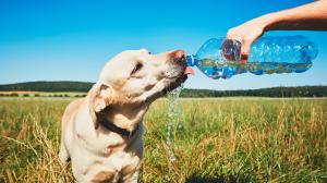 Hydrater son chien l'été : conseils pratiques à propos de l'abreuvement