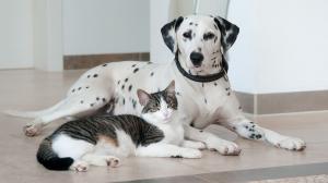 Bien choisir son assurance chien - identifiez vos besoins et comparez les offres