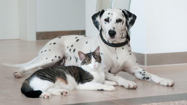 Bien choisir son assurance chien
