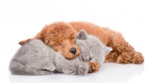 Enregistrement de portée et génération de contrat de réservation de chiot ou chaton 1/2 - Partie 1 : Enregistrement de portée