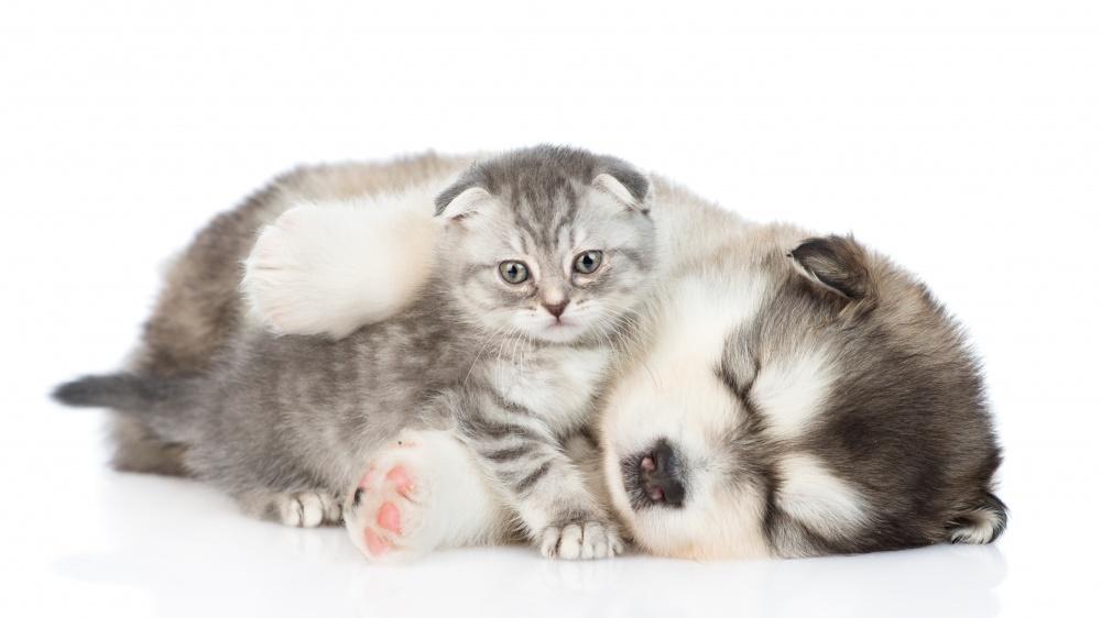 Enregistrement de portée et génération de contrat de réservation de chiot ou chaton 2/2
