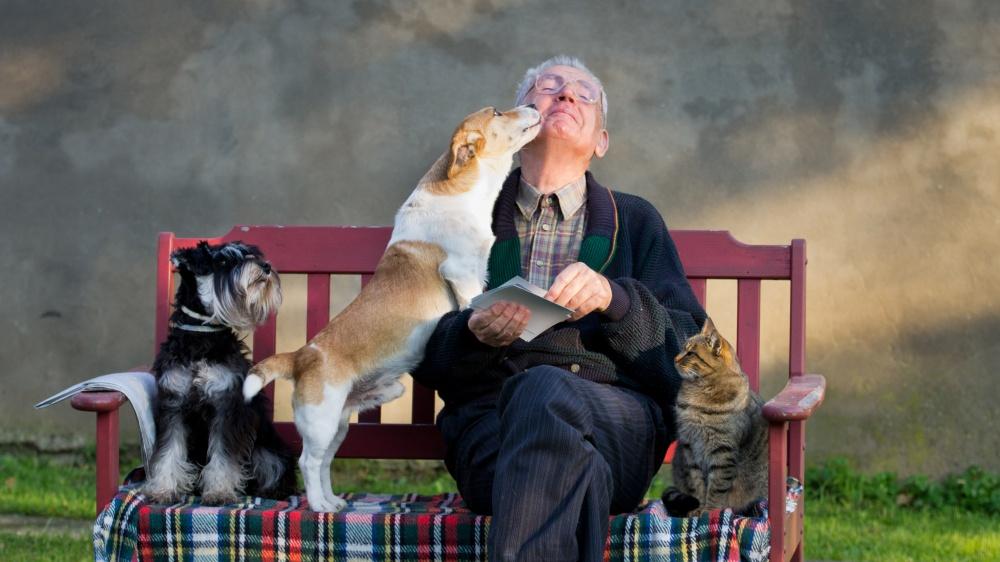 Posséder un chien ou un chat quand on est âgé