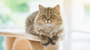 Coût d'entretien annuel d'un chat
