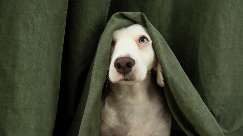 Mon chien a très peur de certains bruits