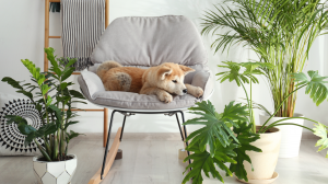 Plantes toxiques pour les chats et les chiens - Attention danger !