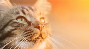 Le chat : attention au coup de chaleur en été