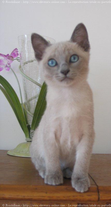 chat treffit petite