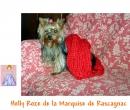 Elevage : <b>De La Marquise De Rascagnac</b> <span class='click'><a href='/eleveur,fiche,405,77705.html'>Ouvrir la fiche de l'éleveur</a></span>