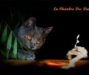 Elevage : <b>La Chambre Des Dames</b> <span class='click'><a href='/eleveur,fiche,135,95957.html'>Ouvrir la fiche de l'éleveur</a></span>