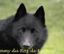 Elevage : <b>Du Roz De Kerhas</b> <span class='click'><a href='/eleveur,fiche,371,135527.html'>Ouvrir la fiche de l'éleveur</a></span>