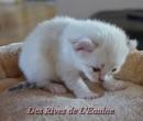 Elevage : <b>Des Rives De L'eaulne</b> <span class='click'><a href='/eleveur,fiche,124,123262.html'>Ouvrir la fiche de l'&eacute;leveur</a></span>