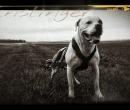 Elevage : <b>Like A Dog Beyond-the-myth</b> <span class='click'><a href='/eleveur,fiche,266,120721.html'>Ouvrir la fiche de l'&eacute;leveur</a></span>