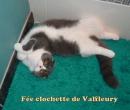 Elevage : <b>De Valfleury</b> <span class='click'><a href='/eleveur,fiche,154,109720.html'>Ouvrir la fiche de l'éleveur</a></span>