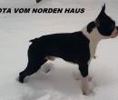 Elevage : <b>Vom Norden Haus</b> <span class='click'><a href='/eleveur,fiche,265,102358.html'>Ouvrir la fiche de l'éleveur</a></span>