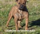 Elevage : <b>Domaine De Couroules</b> <span class='click'><a href='/eleveur,fiche,1636,140997.html'>Ouvrir la fiche de l'&eacute;leveur</a></span>
